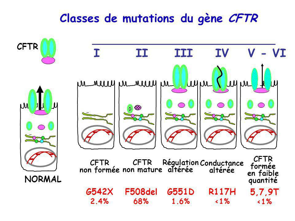 Classes de mutations du gène CFTR