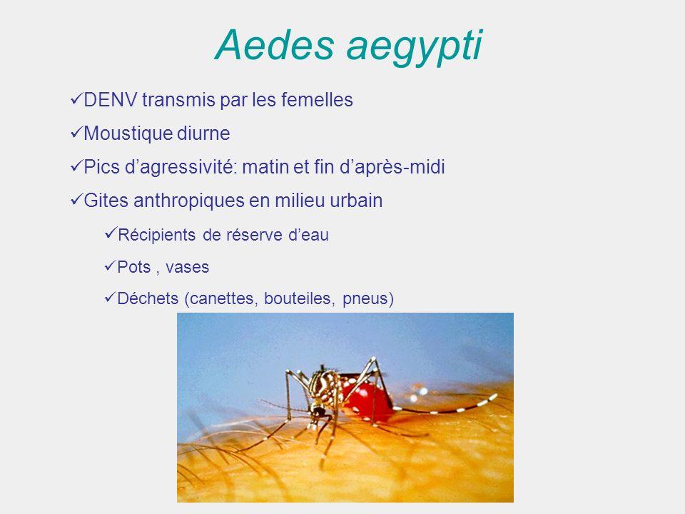 Aedes aegypti DENV transmis par les femelles Moustique diurne