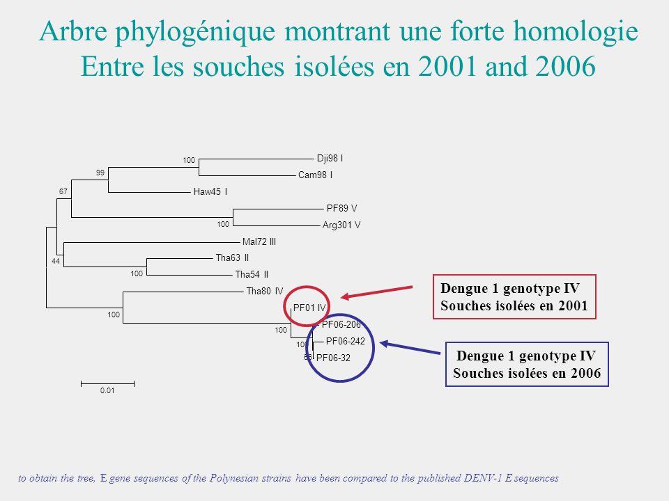 Arbre phylogénique montrant une forte homologie