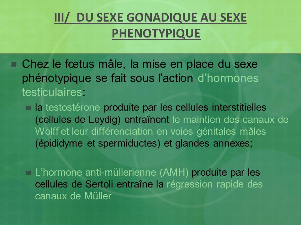 III/ DU SEXE GONADIQUE AU SEXE PHENOTYPIQUE