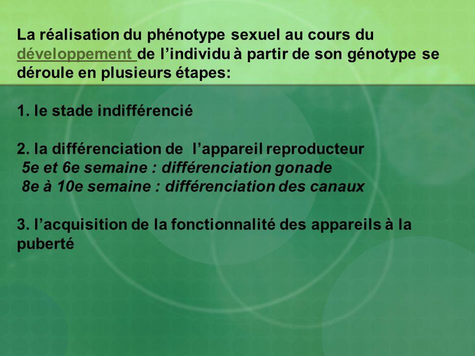 La réalisation du phénotype sexuel au cours du développement de l'individu à partir de son génotype se déroule en plusieurs étapes: 1.