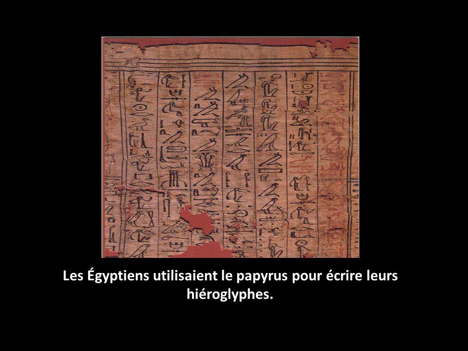Les Égyptiens utilisaient le papyrus pour écrire leurs hiéroglyphes.