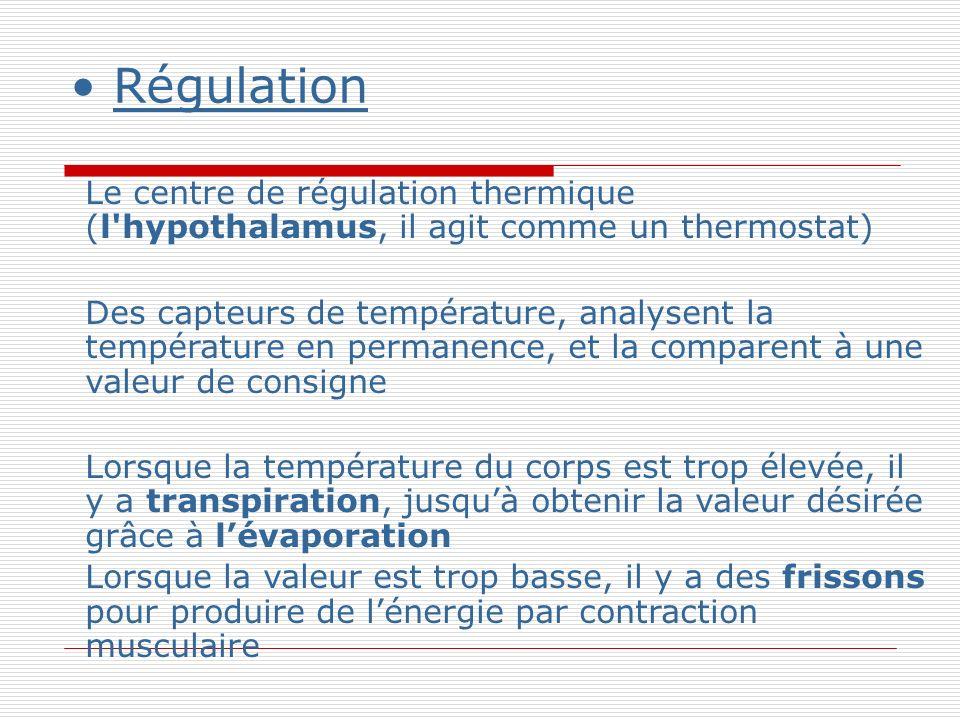 Régulation Le centre de régulation thermique (l hypothalamus, il agit comme un thermostat)