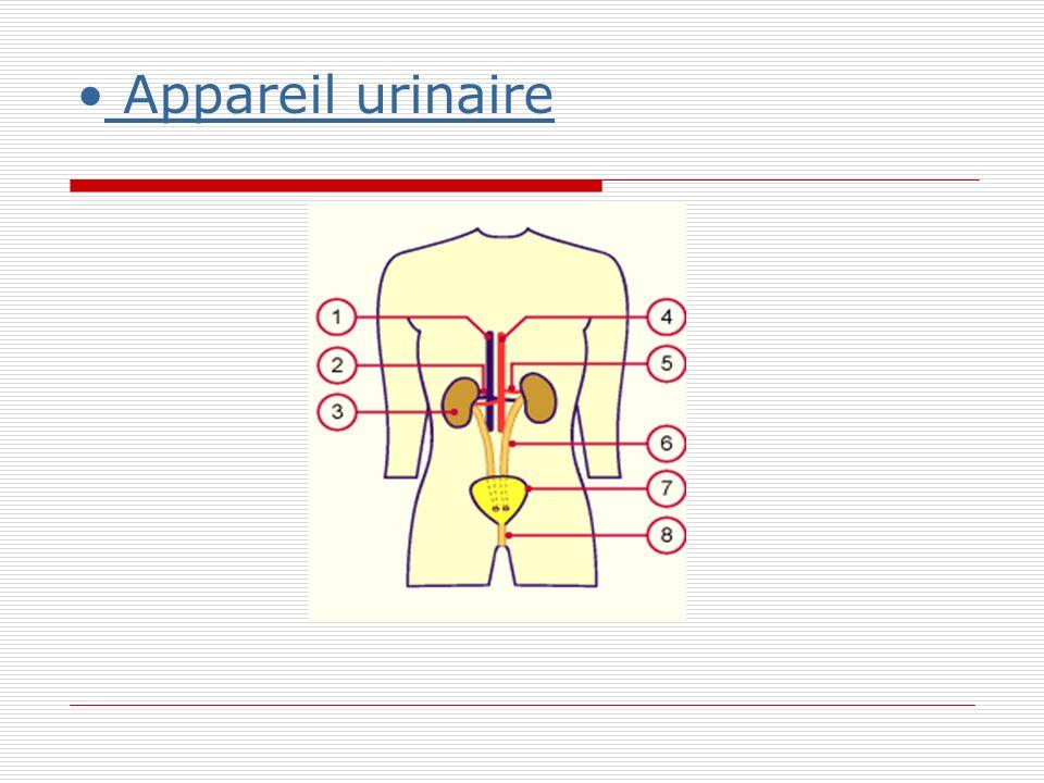 Appareil urinaire