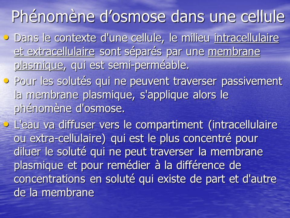 Phénomène d'osmose dans une cellule