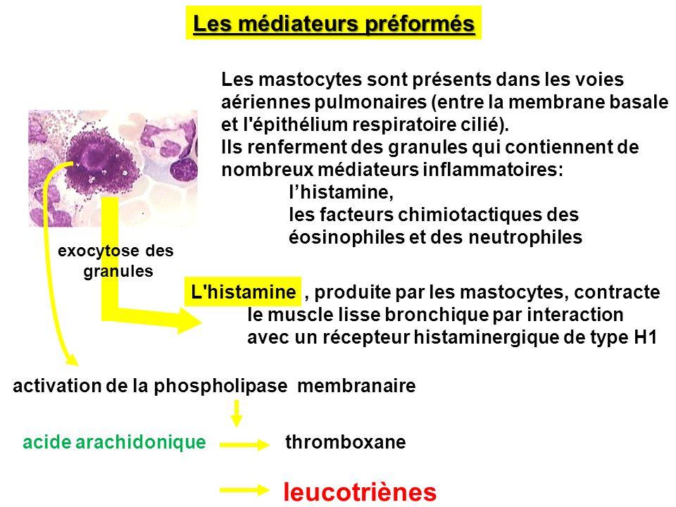 leucotriènes Les médiateurs préformés
