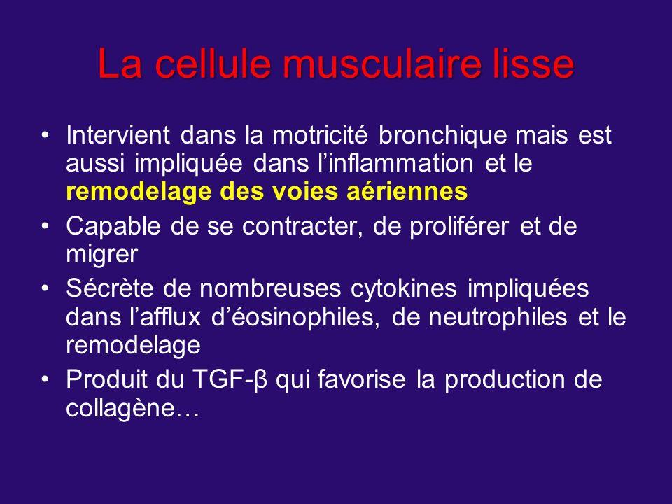 La cellule musculaire lisse