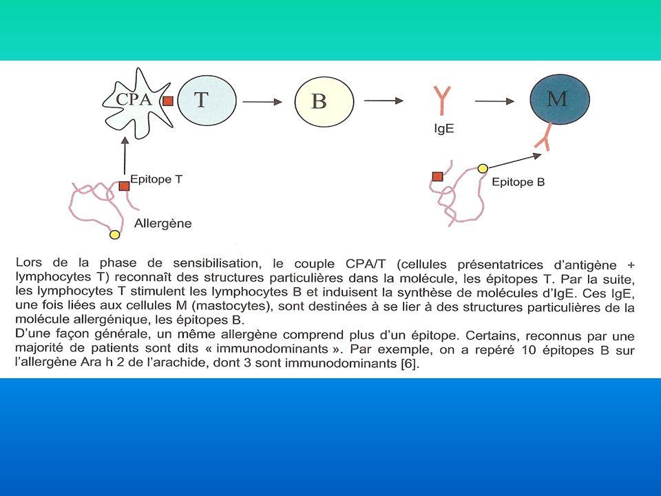 Lors d'un 1er contact, les AG traversent les muqueuses et sont captés par les cellules présentant l'AG (CPA)