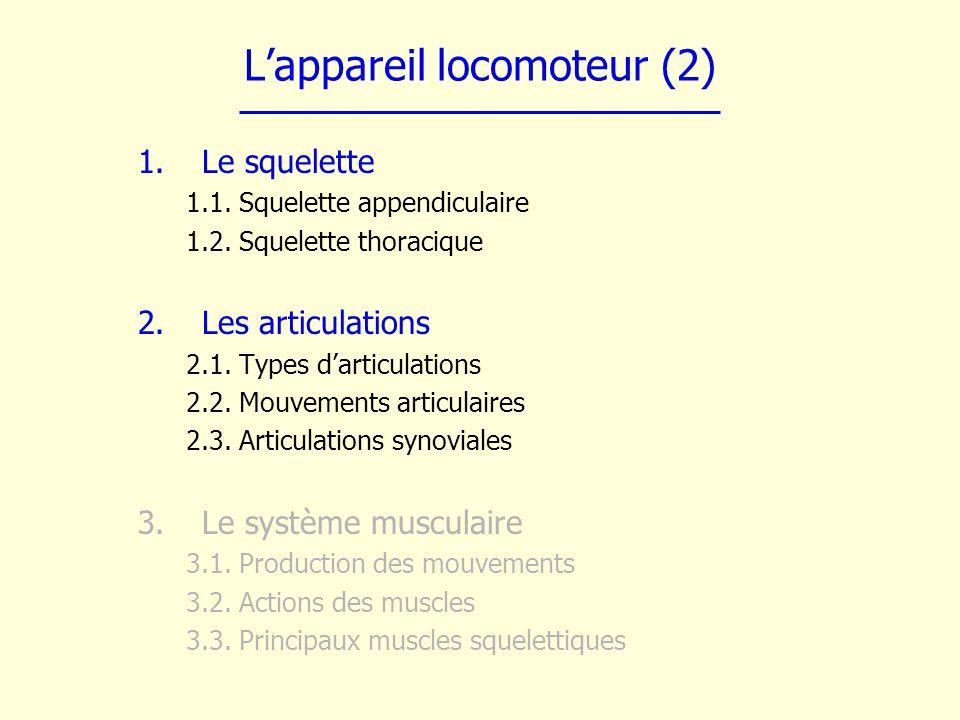 L'appareil locomoteur (2)