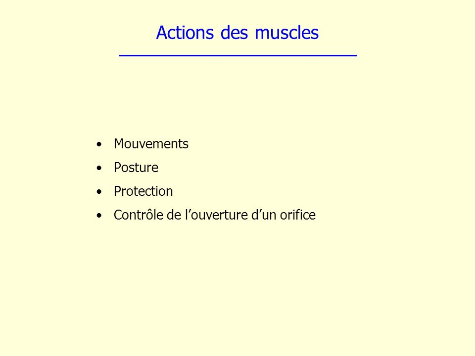 Actions des muscles Mouvements Posture Protection