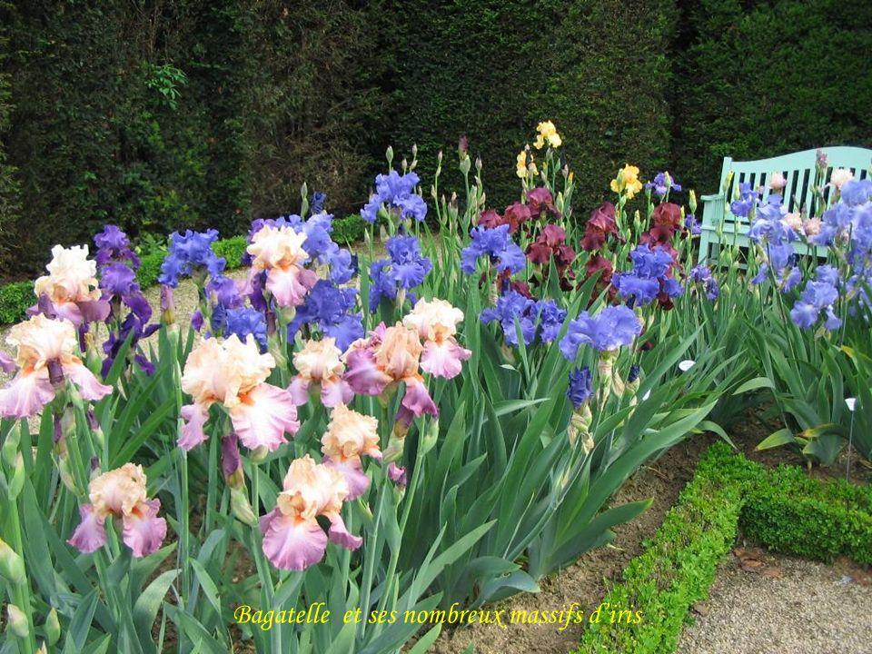 Bagatelle et ses nombreux massifs d'iris