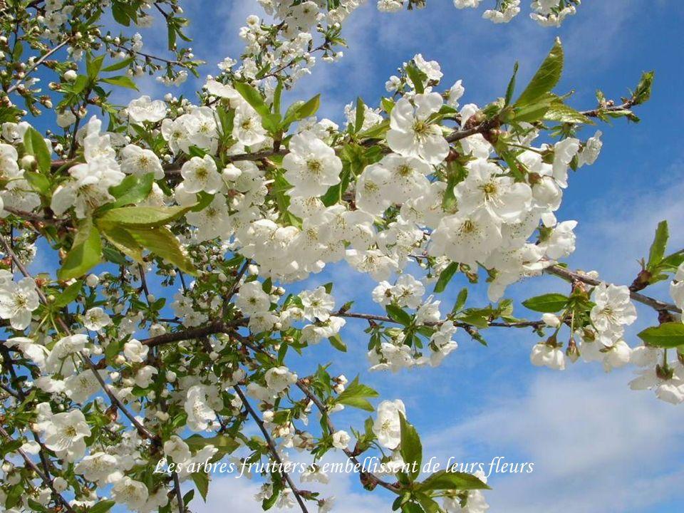 Les arbres fruitiers s'embellissent de leurs fleurs