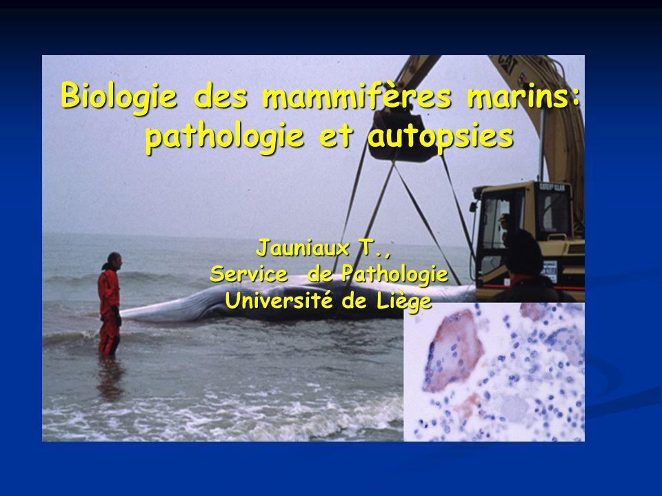 Biologie des mammifères marins: pathologie et autopsies