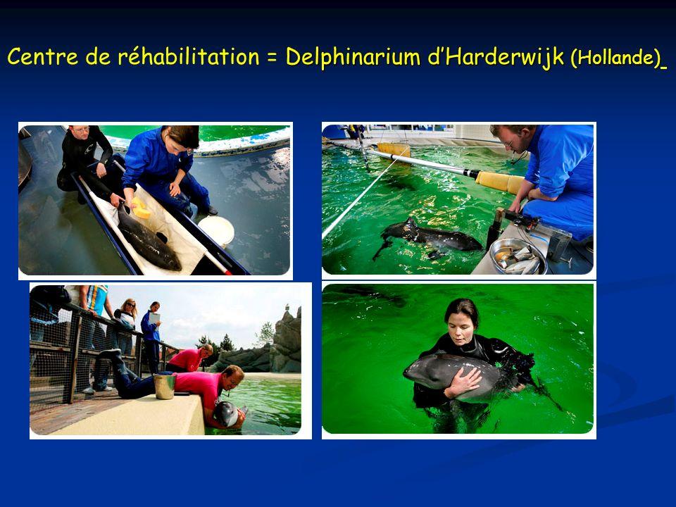 Centre de réhabilitation = Delphinarium d'Harderwijk (Hollande)