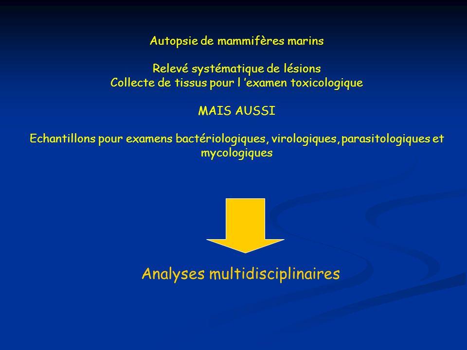 Analyses multidisciplinaires