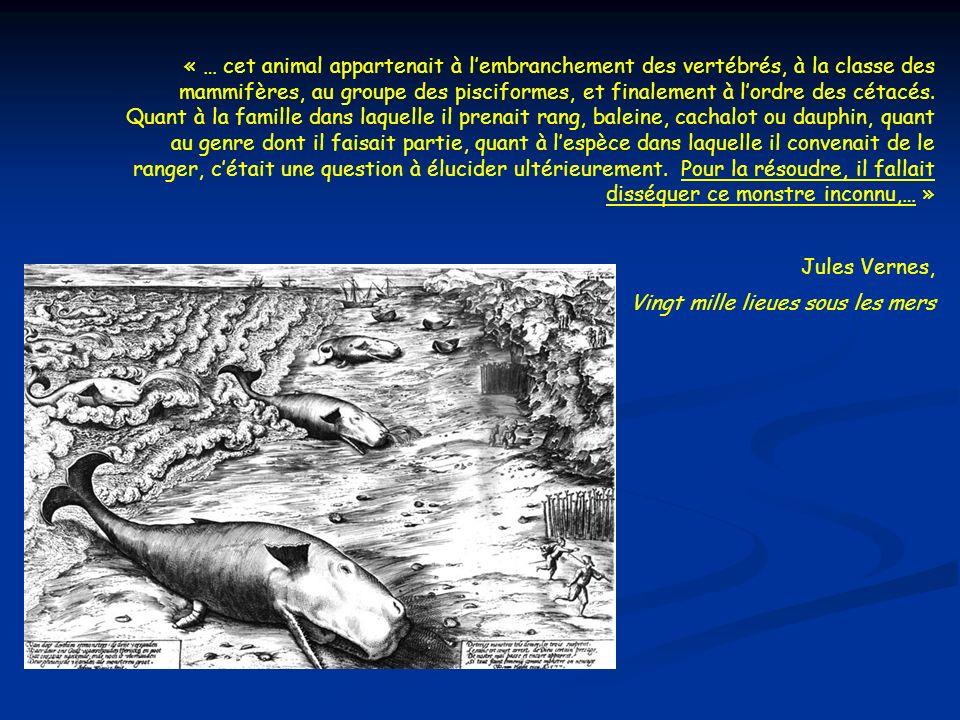 « … cet animal appartenait à l'embranchement des vertébrés, à la classe des mammifères, au groupe des pisciformes, et finalement à l'ordre des cétacés. Quant à la famille dans laquelle il prenait rang, baleine, cachalot ou dauphin, quant au genre dont il faisait partie, quant à l'espèce dans laquelle il convenait de le ranger, c'était une question à élucider ultérieurement. Pour la résoudre, il fallait disséquer ce monstre inconnu,… »