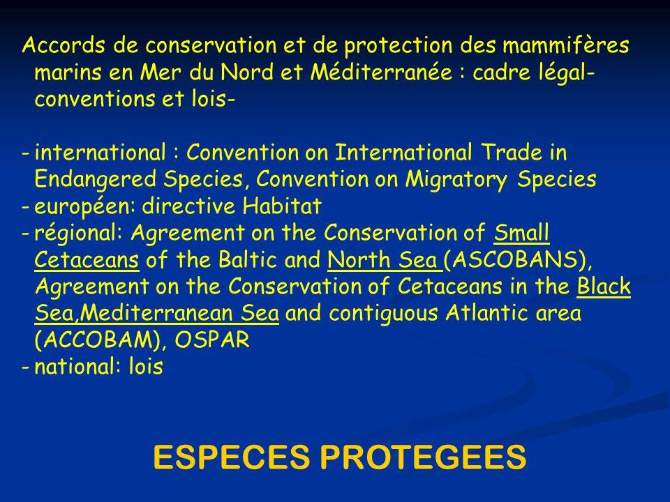 Accords de conservation et de protection des mammifères marins en Mer du Nord et Méditerranée : cadre légal-conventions et lois-