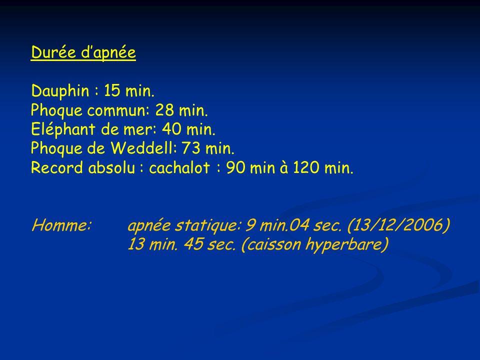 Durée d'apnée Dauphin : 15 min. Phoque commun: 28 min. Eléphant de mer: 40 min. Phoque de Weddell: 73 min.