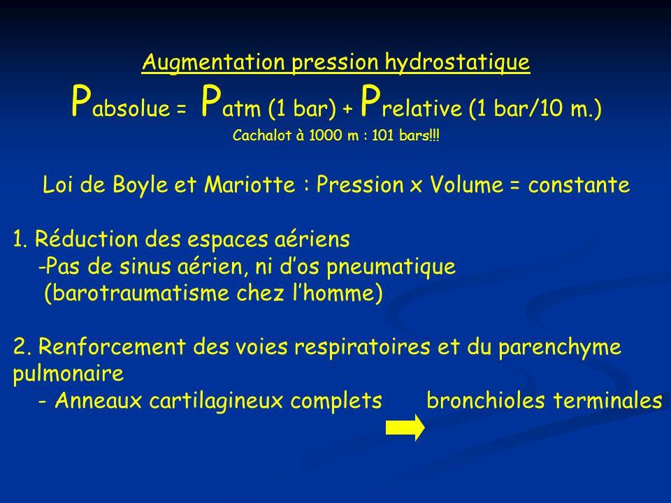 Pabsolue = Patm (1 bar) + Prelative (1 bar/10 m.)