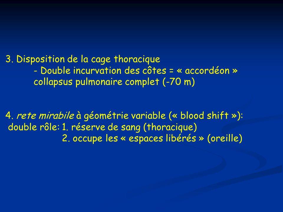 3. Disposition de la cage thoracique