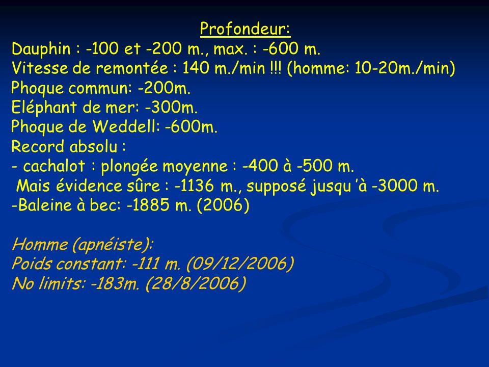 Vitesse de remontée : 140 m./min !!! (homme: 10-20m./min)