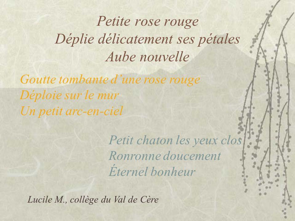 Petite rose rouge Déplie délicatement ses pétales Aube nouvelle