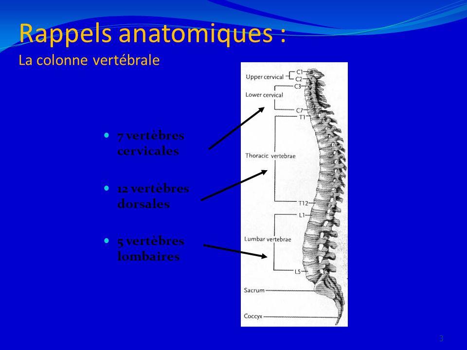 Rappels anatomiques : La colonne vertébrale