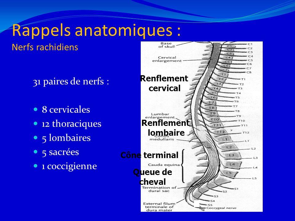 Rappels anatomiques : Nerfs rachidiens