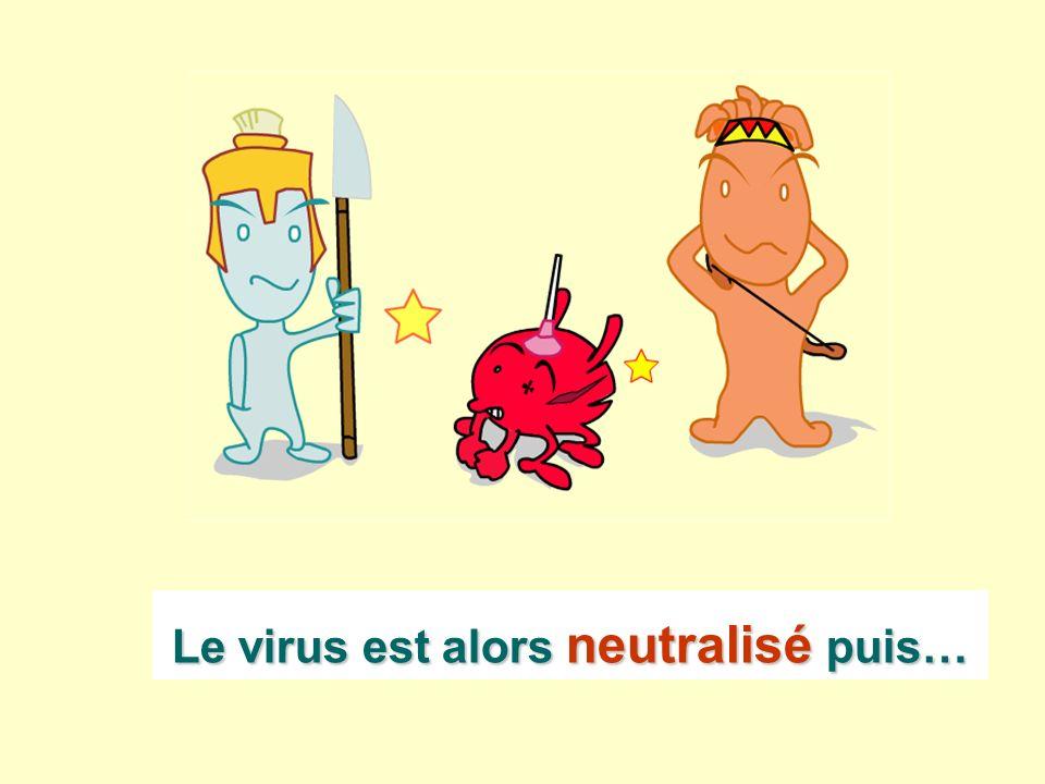 Le virus est alors neutralisé puis…