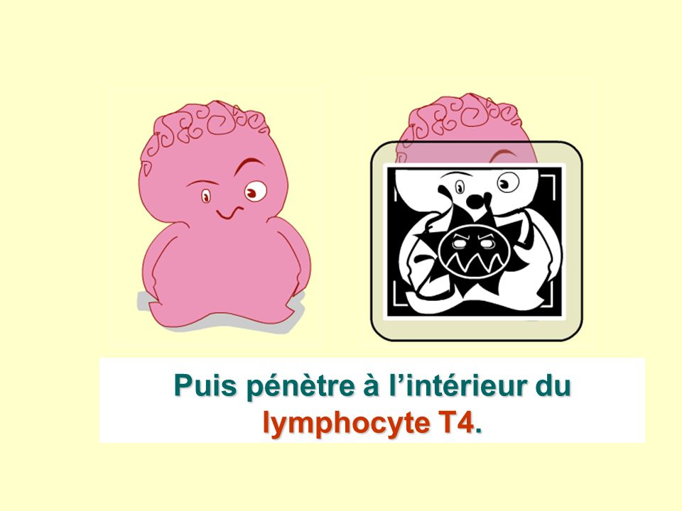 Puis pénètre à l'intérieur du lymphocyte T4.