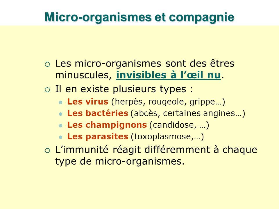 Micro-organismes et compagnie