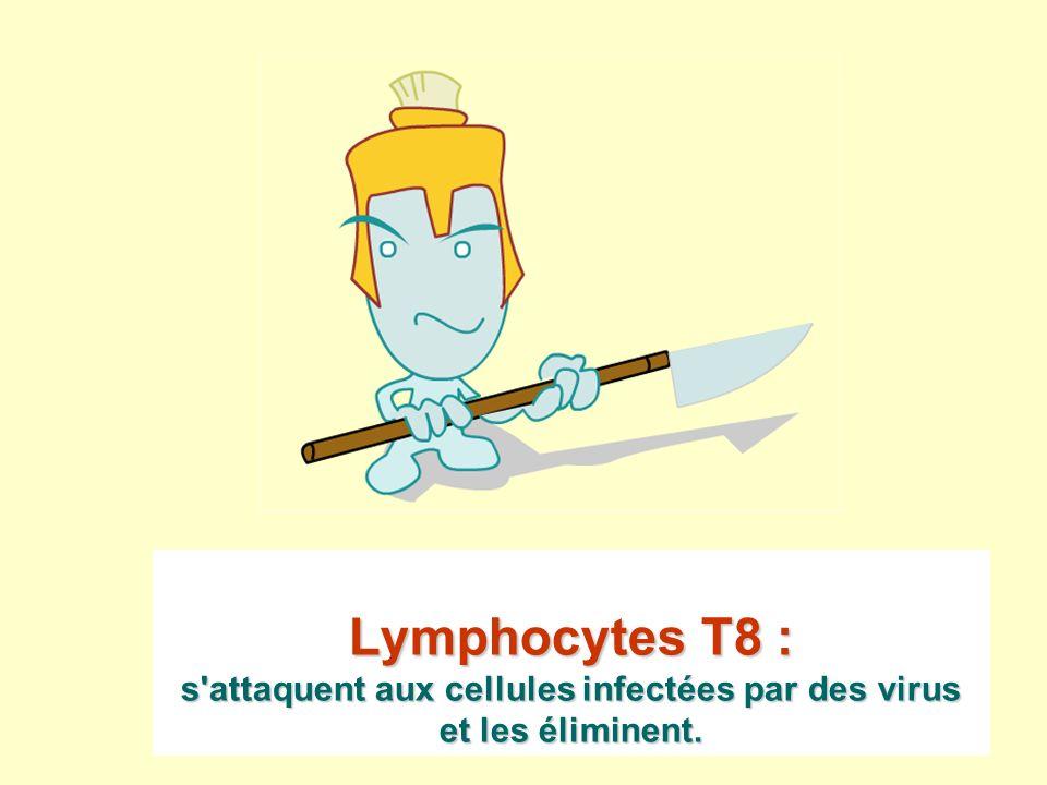 Lymphocytes T8 : s attaquent aux cellules infectées par des virus et les éliminent.
