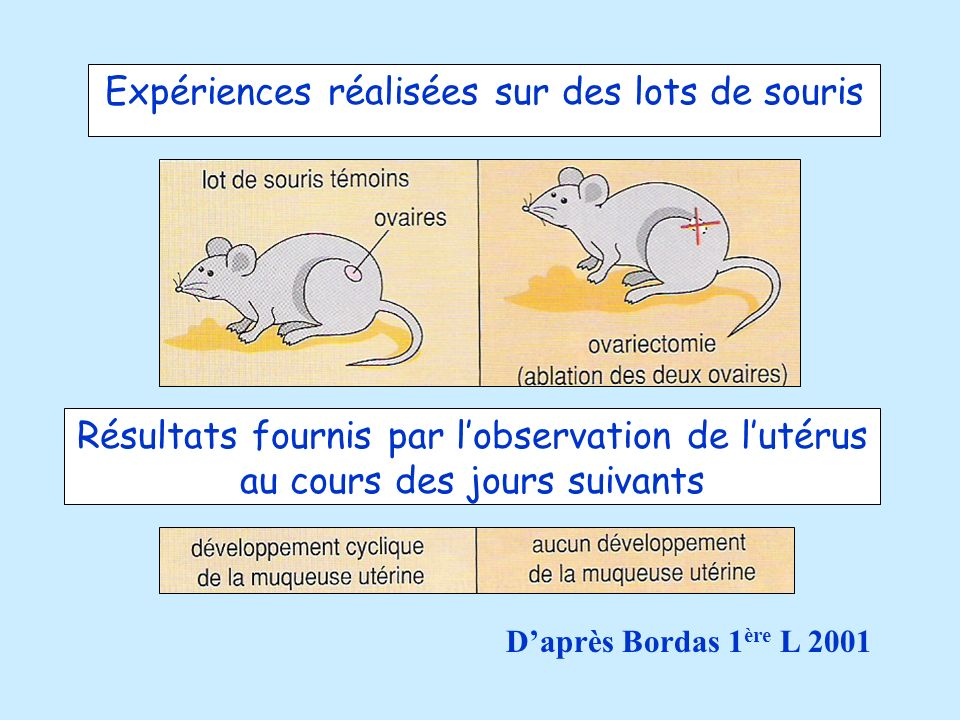 Expériences réalisées sur des lots de souris