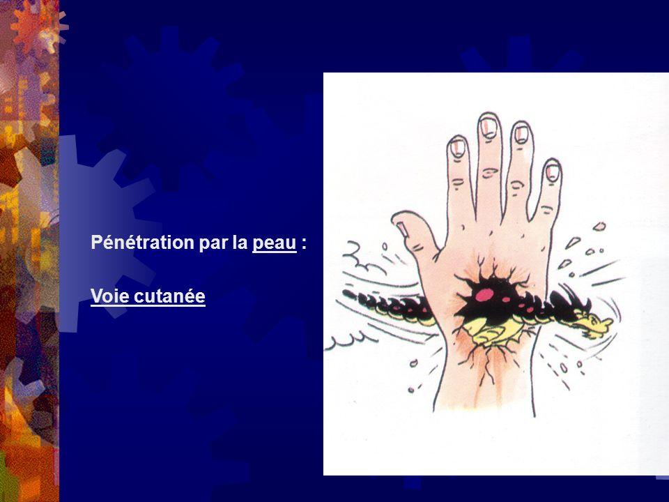 Pénétration par la peau :
