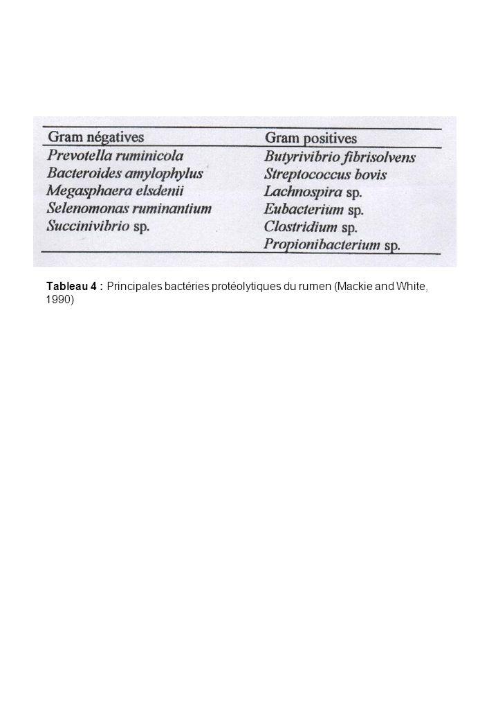 Tableau 4 : Principales bactéries protéolytiques du rumen (Mackie and White, 1990)