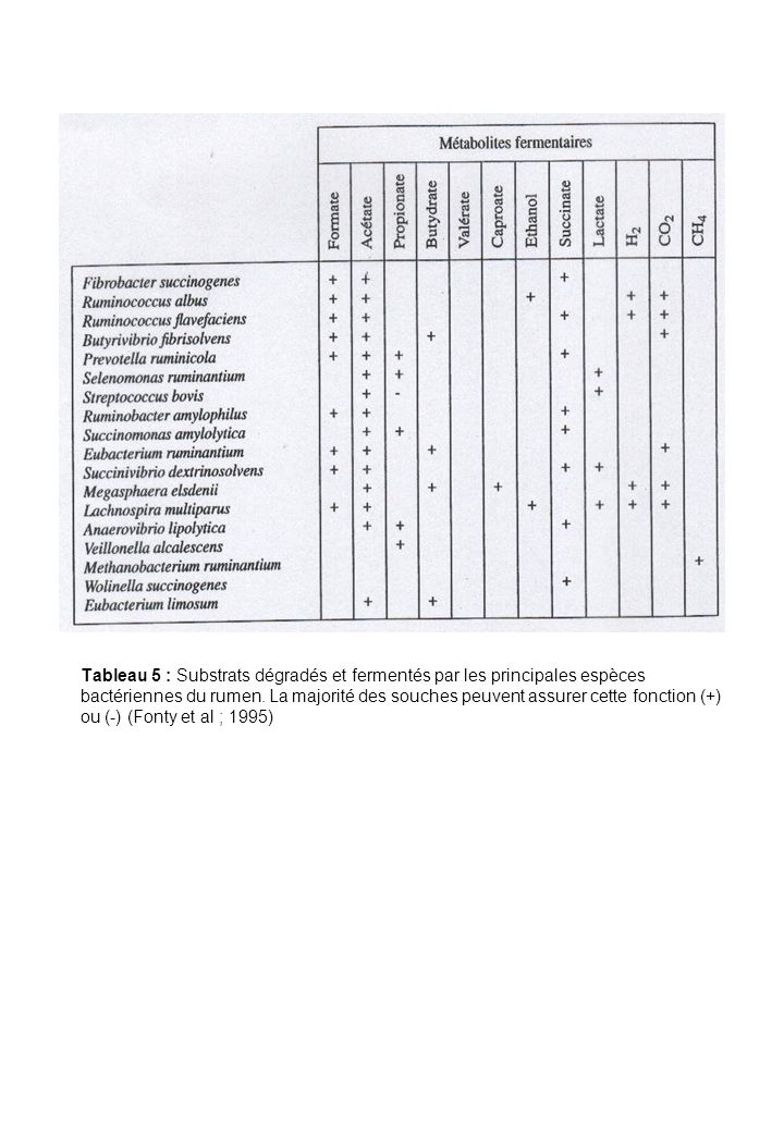 Tableau 5 : Substrats dégradés et fermentés par les principales espèces bactériennes du rumen.
