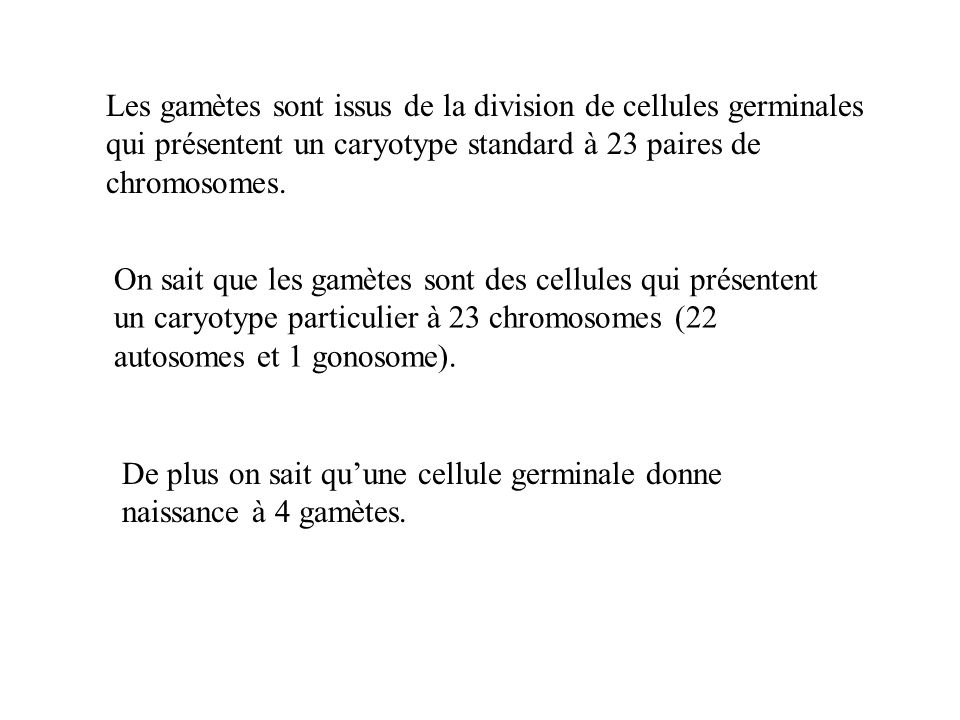 Les gamètes sont issus de la division de cellules germinales qui présentent un caryotype standard à 23 paires de chromosomes.