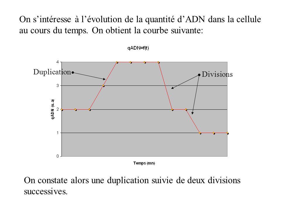 On s'intéresse à l'évolution de la quantité d'ADN dans la cellule au cours du temps. On obtient la courbe suivante: