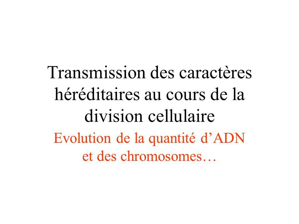 Evolution de la quantité d'ADN et des chromosomes…