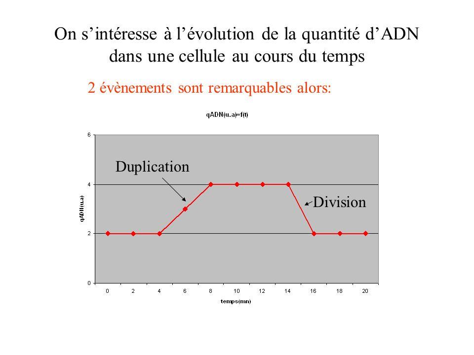 On s'intéresse à l'évolution de la quantité d'ADN dans une cellule au cours du temps