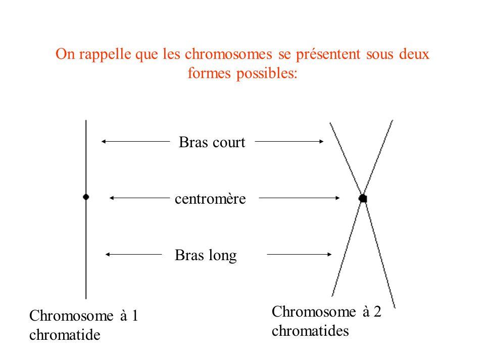 On rappelle que les chromosomes se présentent sous deux formes possibles: