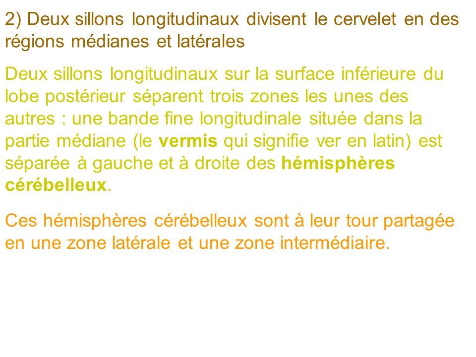 2) Deux sillons longitudinaux divisent le cervelet en des régions médianes et latérales