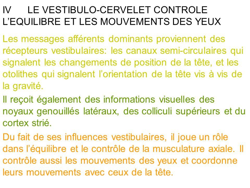 IV LE VESTIBULO-CERVELET CONTROLE L'EQUILIBRE ET LES MOUVEMENTS DES YEUX