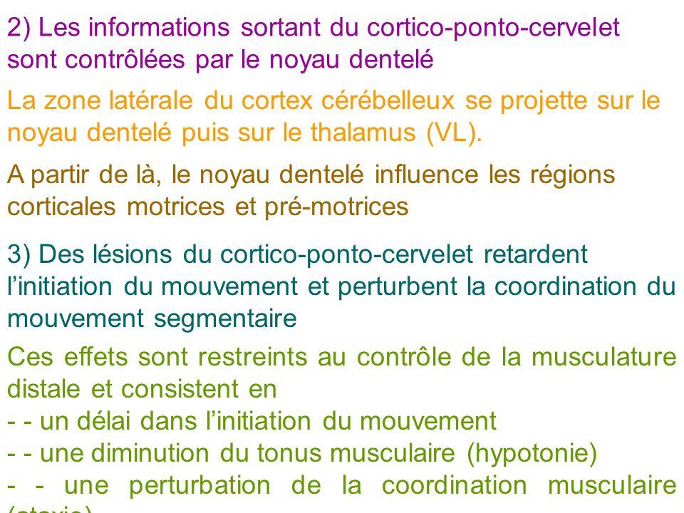 2) Les informations sortant du cortico-ponto-cervelet sont contrôlées par le noyau dentelé