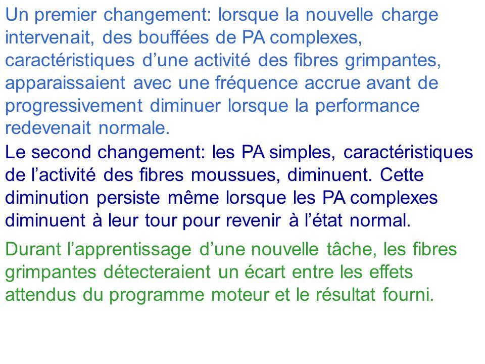 Un premier changement: lorsque la nouvelle charge intervenait, des bouffées de PA complexes, caractéristiques d'une activité des fibres grimpantes, apparaissaient avec une fréquence accrue avant de progressivement diminuer lorsque la performance redevenait normale.