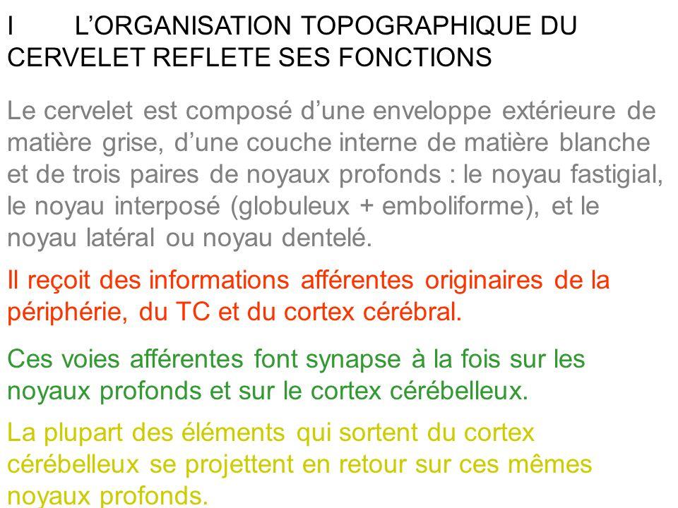 I L'ORGANISATION TOPOGRAPHIQUE DU CERVELET REFLETE SES FONCTIONS