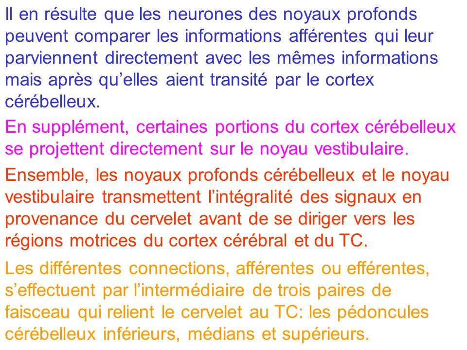 Il en résulte que les neurones des noyaux profonds peuvent comparer les informations afférentes qui leur parviennent directement avec les mêmes informations mais après qu'elles aient transité par le cortex cérébelleux.