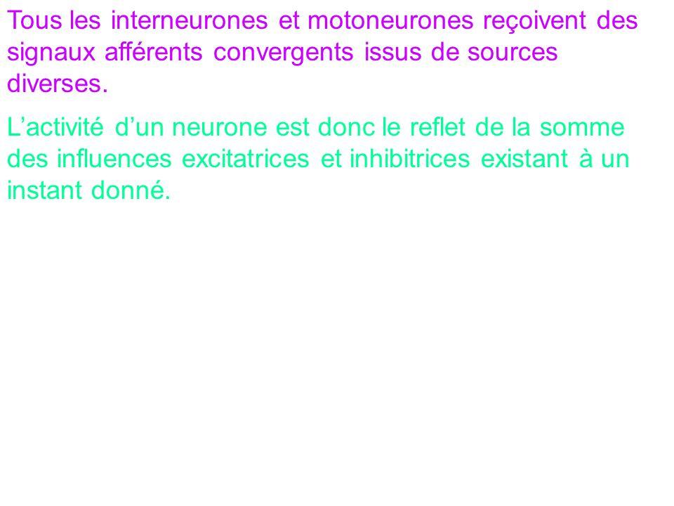 Tous les interneurones et motoneurones reçoivent des signaux afférents convergents issus de sources diverses.