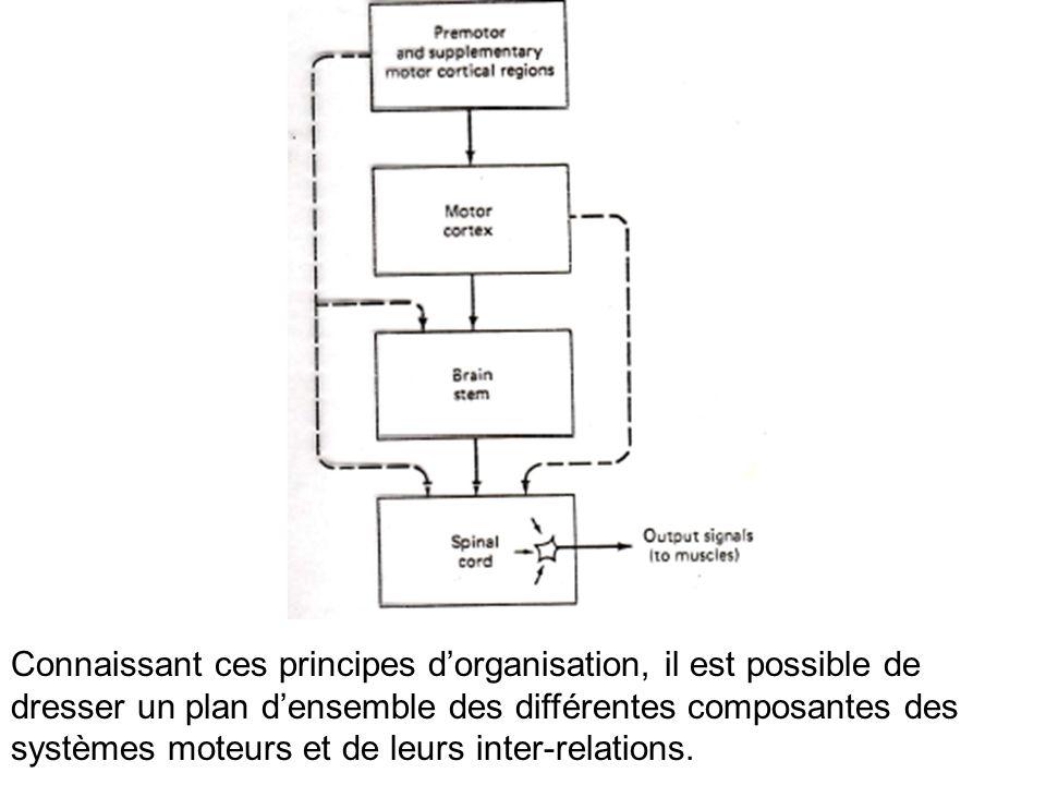 Connaissant ces principes d'organisation, il est possible de dresser un plan d'ensemble des différentes composantes des systèmes moteurs et de leurs inter-relations.