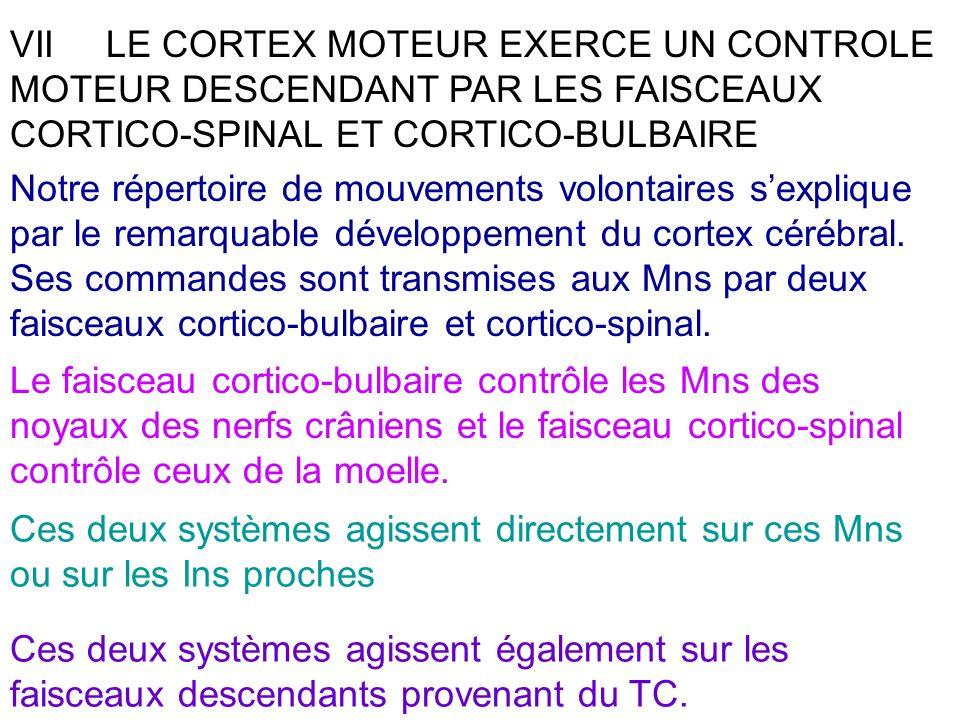 VII LE CORTEX MOTEUR EXERCE UN CONTROLE MOTEUR DESCENDANT PAR LES FAISCEAUX CORTICO-SPINAL ET CORTICO-BULBAIRE